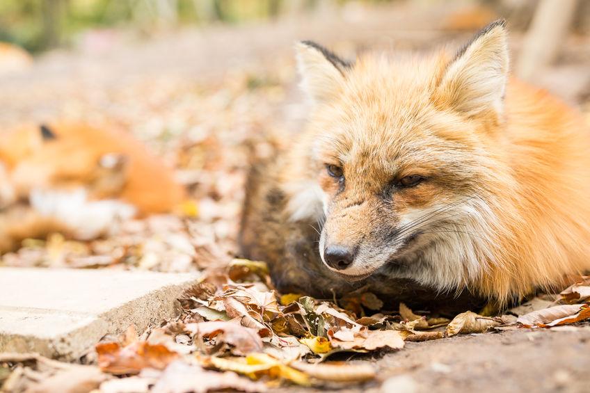 Hogyan zajlik a veszélyes állat mentesítés?